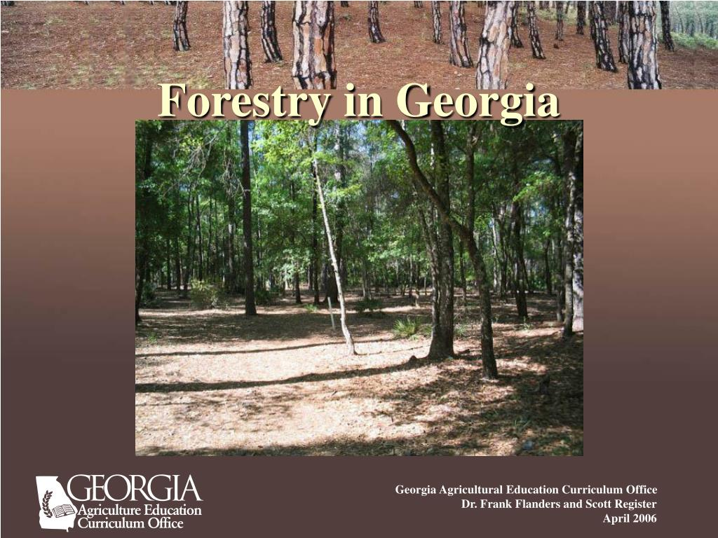 Forestry in Georgia