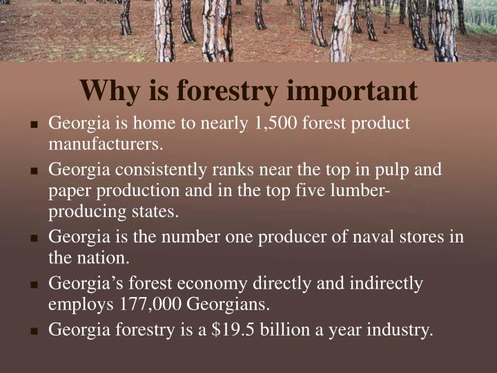 Why is forestry important