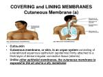 covering and lining membranes cutaneous membrane a