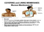 covering and lining membranes mucous membranes b