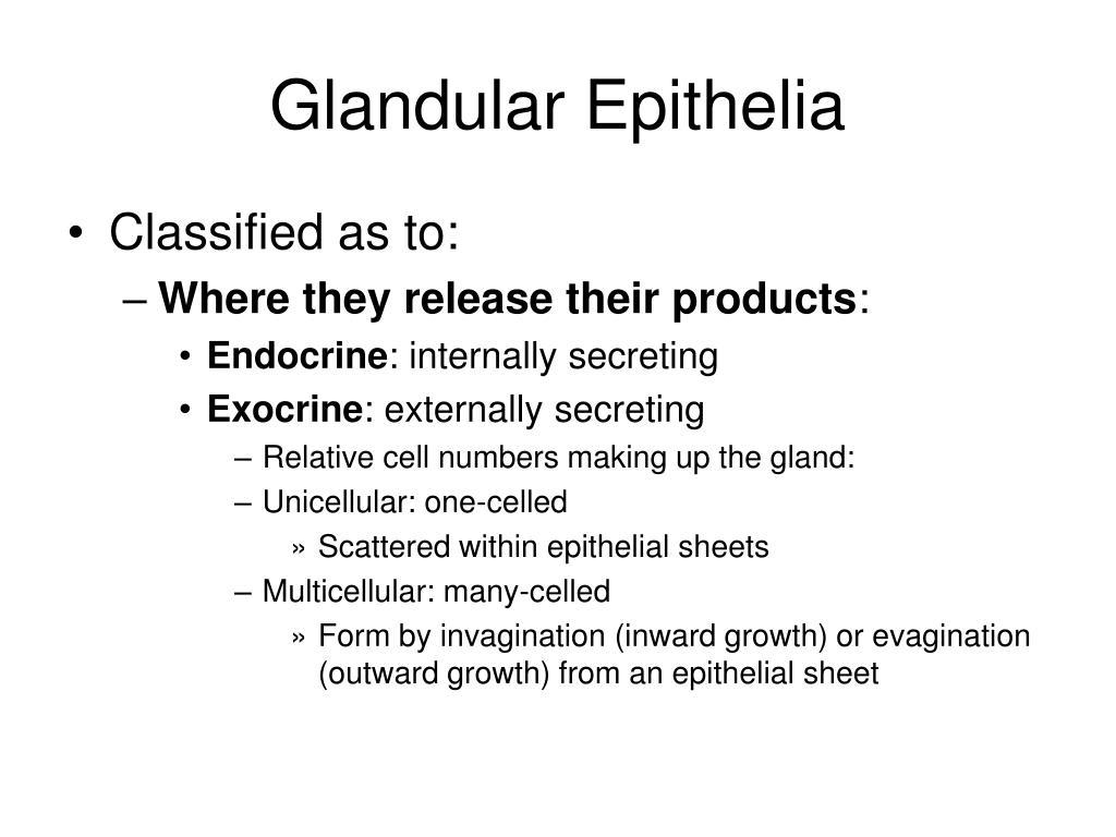 Glandular Epithelia