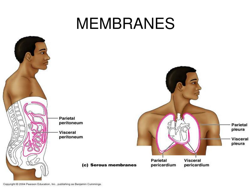MEMBRANES