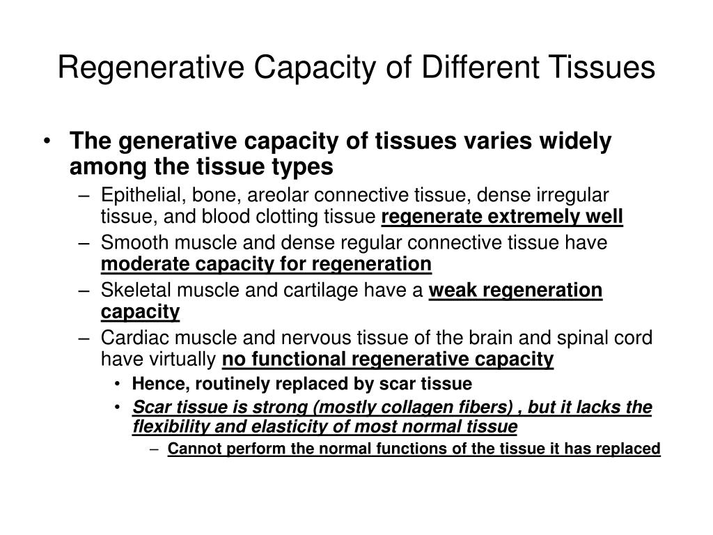 Regenerative Capacity of Different Tissues