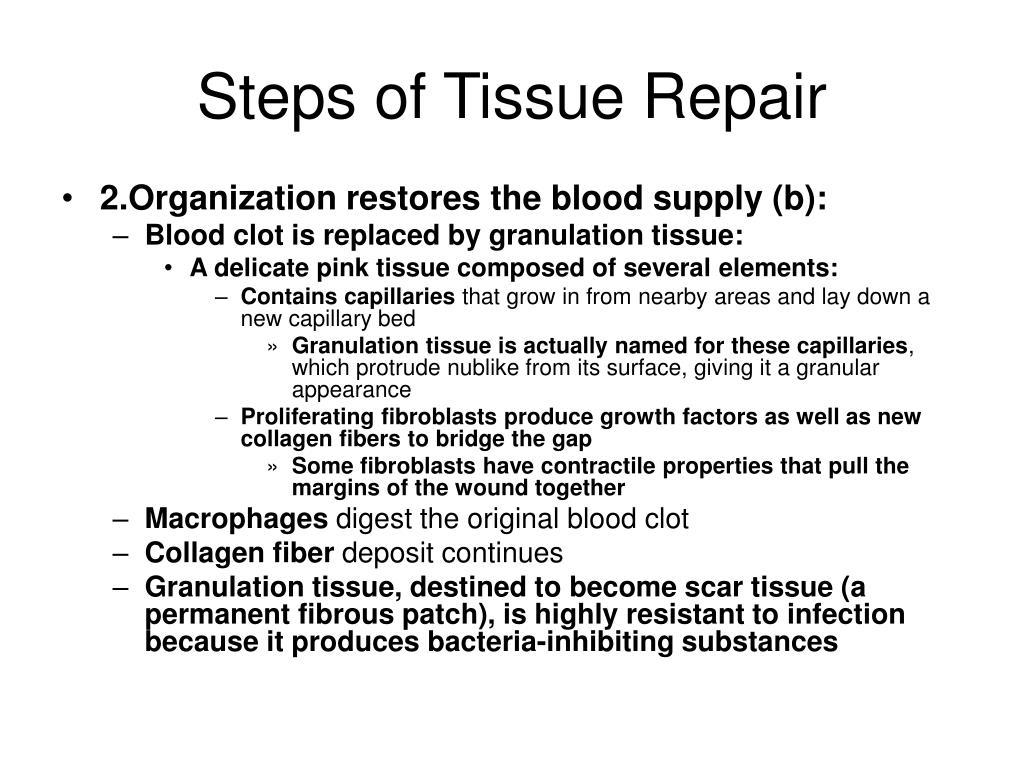 Steps of Tissue Repair