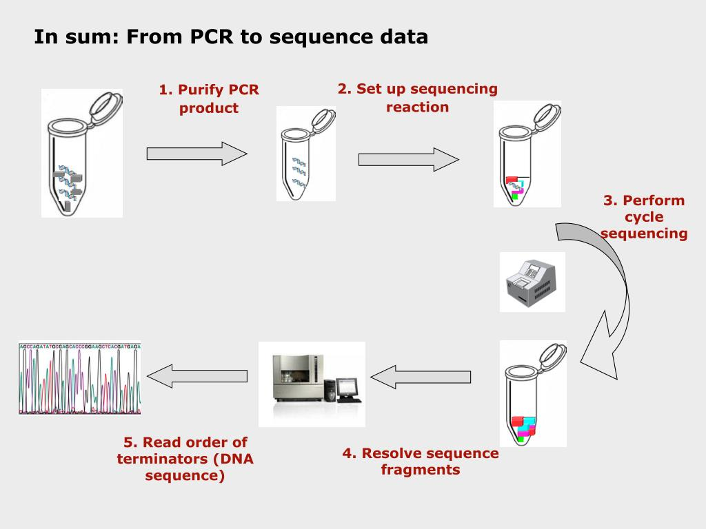 In sum: From PCR to sequence data