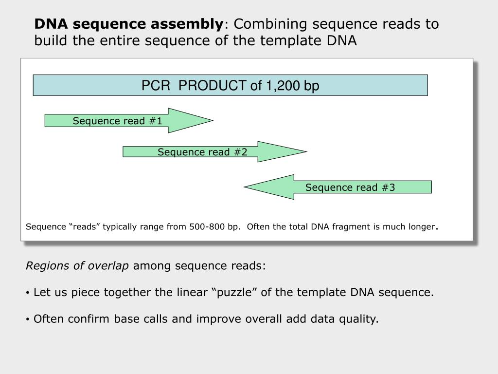PCR  PRODUCT of 1,200 bp