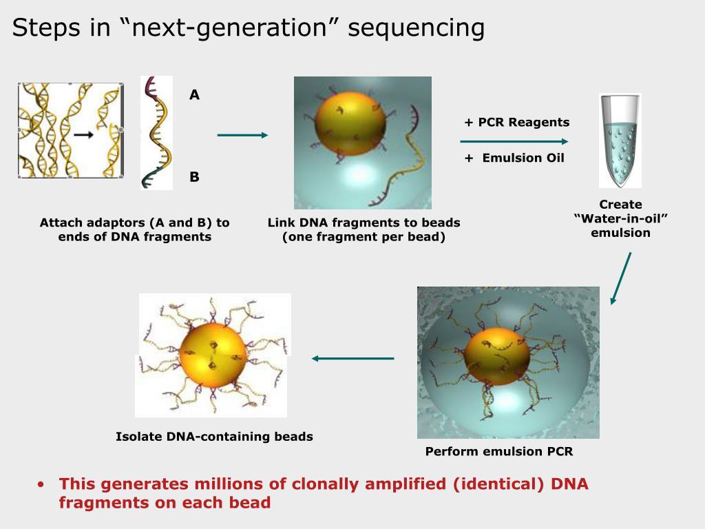 + PCR Reagents