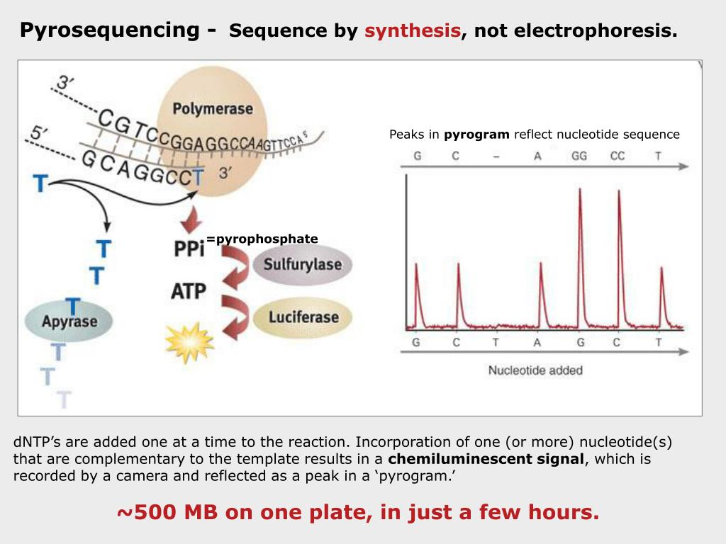 Pyrosequencing -