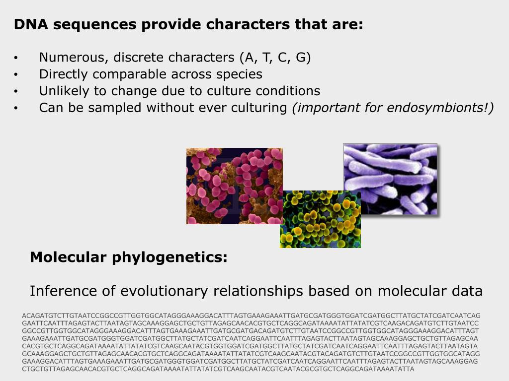 DNA sequences provide characters that are: