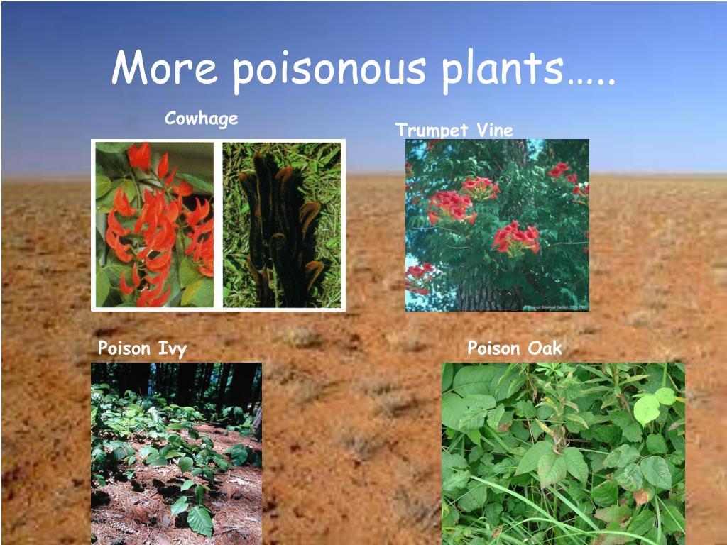 More poisonous plants…..