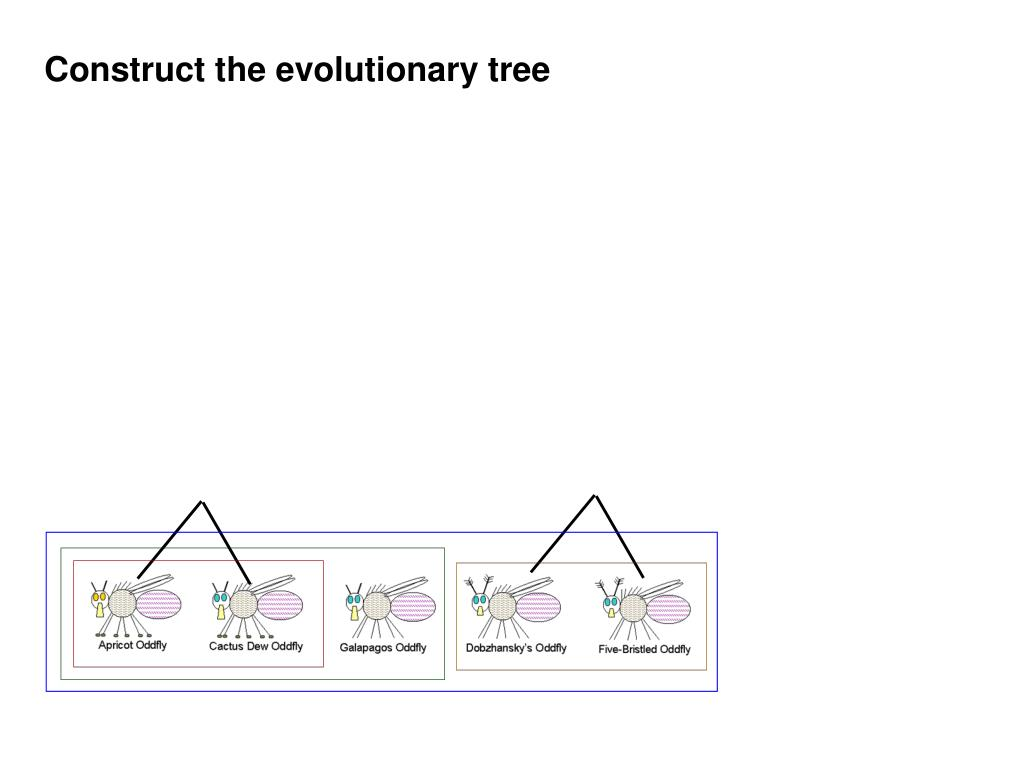 Construct the evolutionary tree