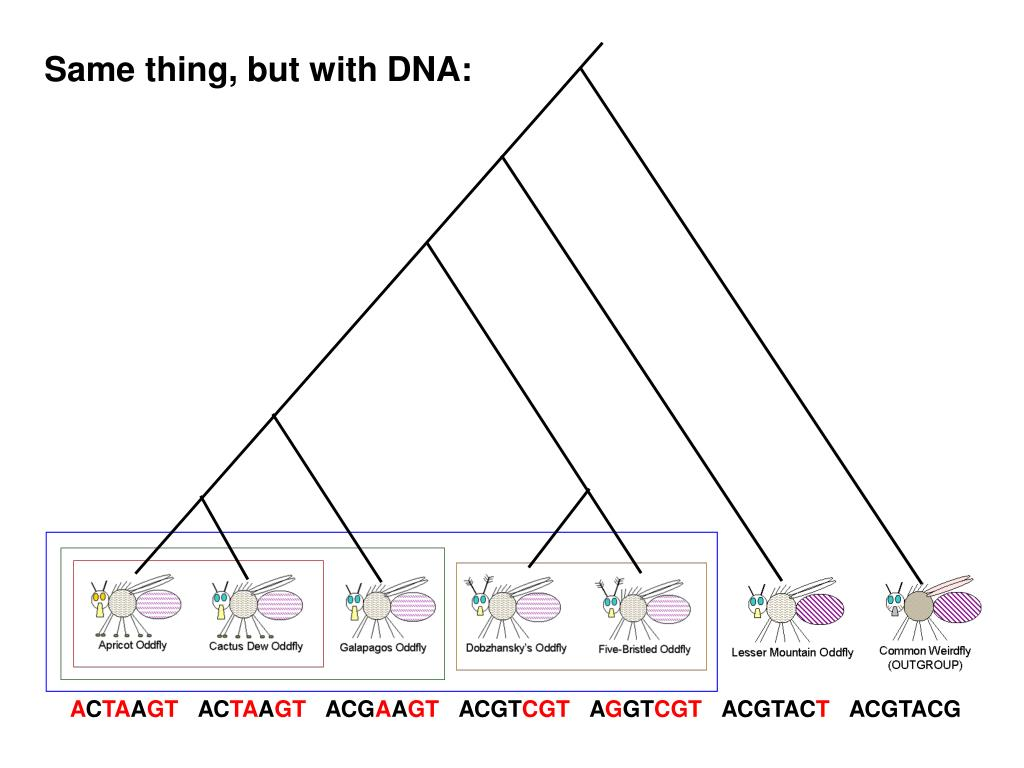 Same thing, but with DNA: