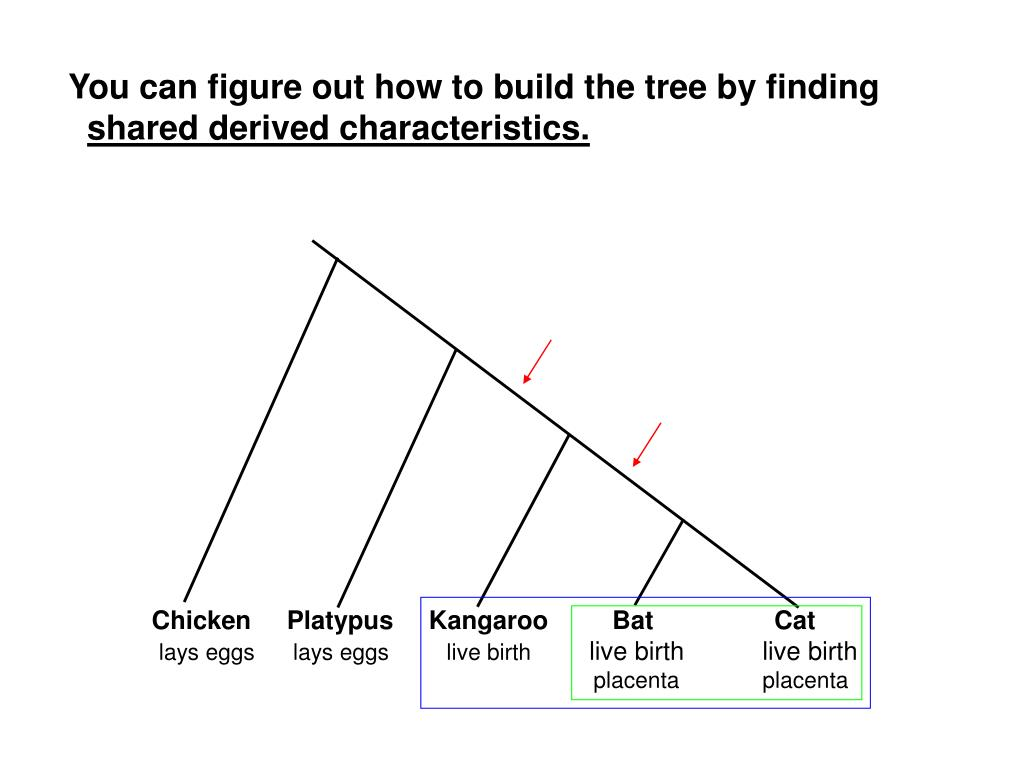 You can figure out how to build the tree by finding