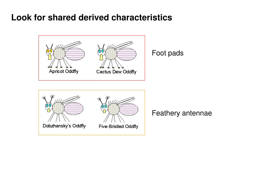 Look for shared derived characteristics