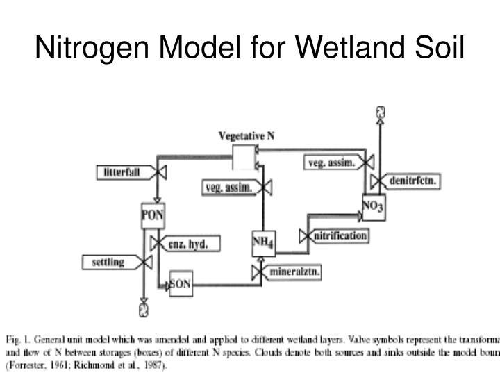 Nitrogen Model for Wetland Soil