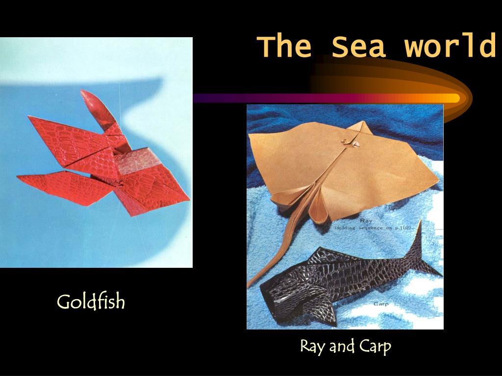 The Sea world
