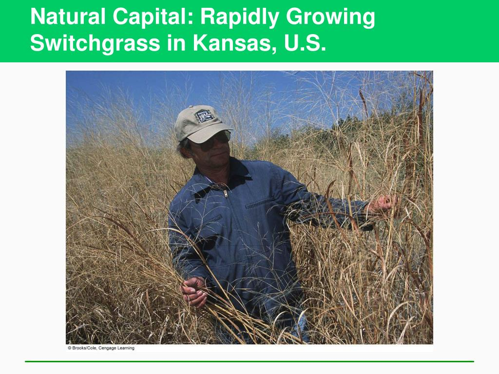 Natural Capital: Rapidly Growing Switchgrass in Kansas, U.S.