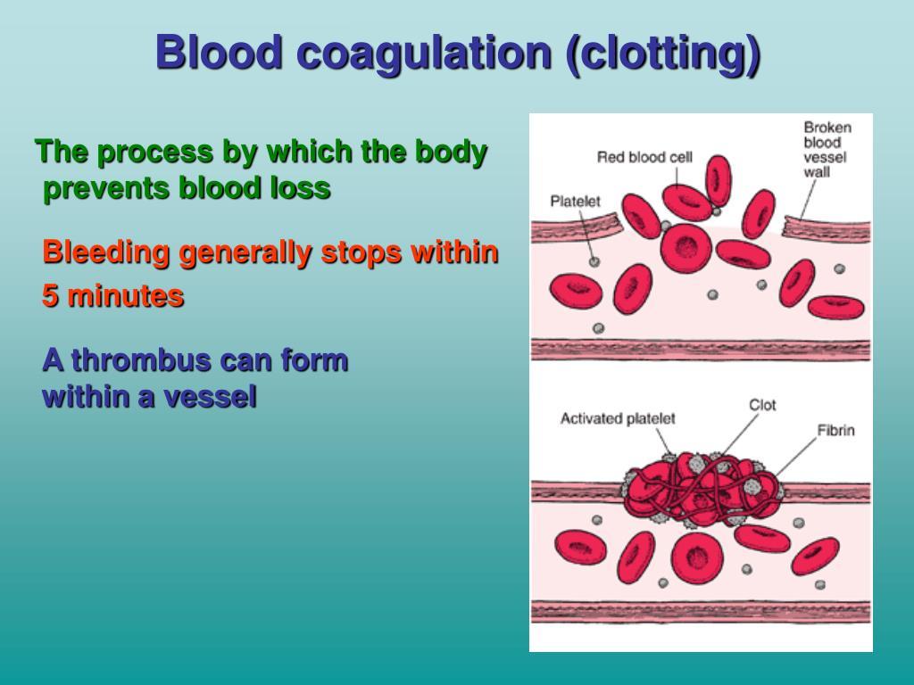 Blood coagulation (clotting)