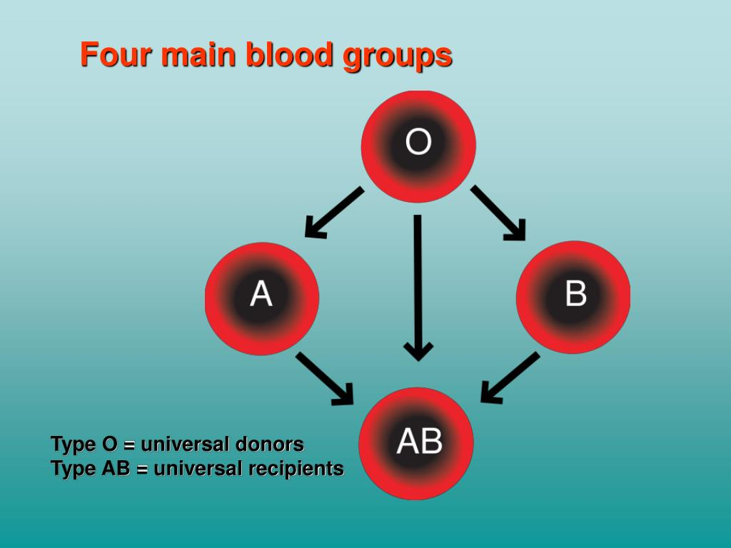 Four main blood groups