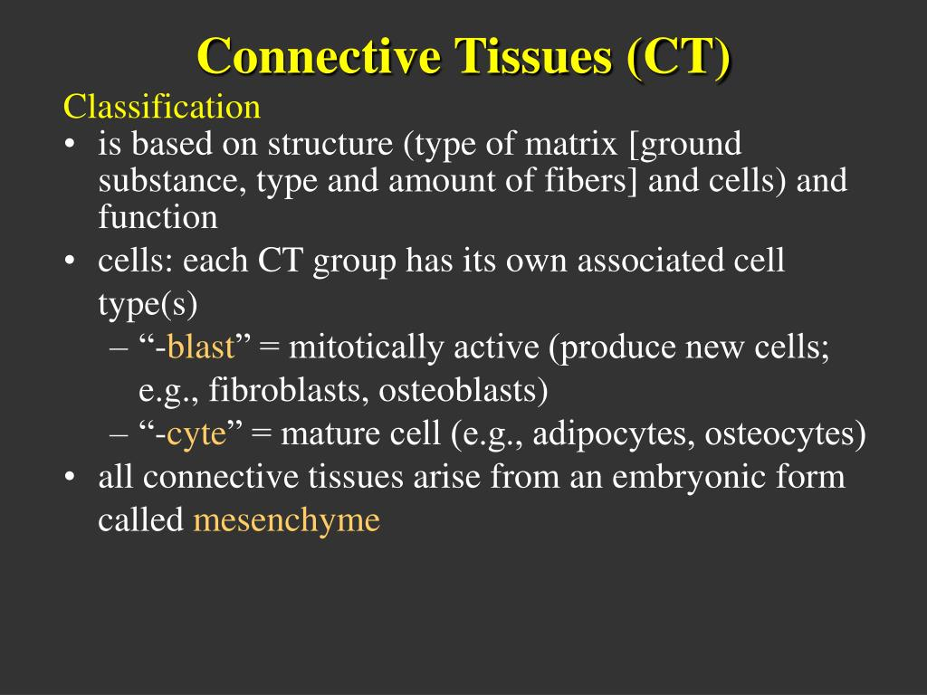 Connective Tissues (CT)
