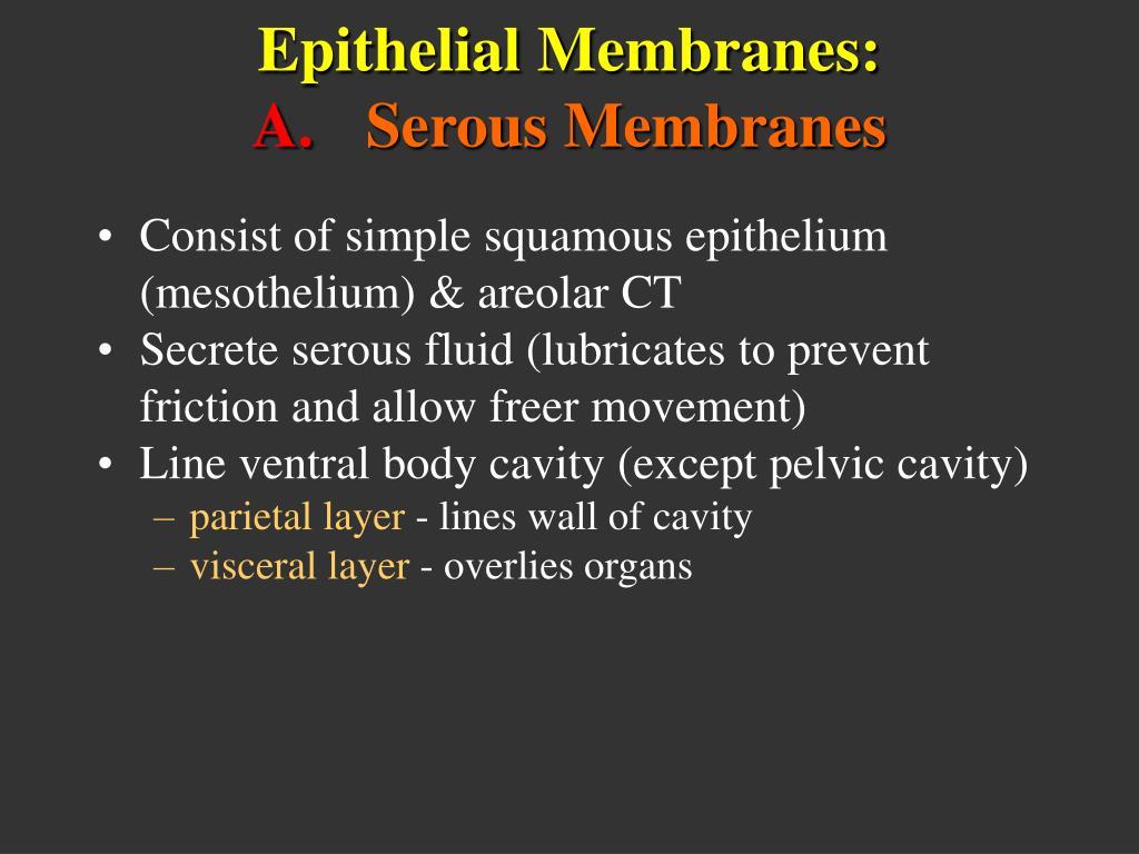 Epithelial Membranes: