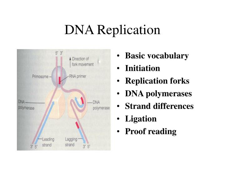 Thesis Dna Repair