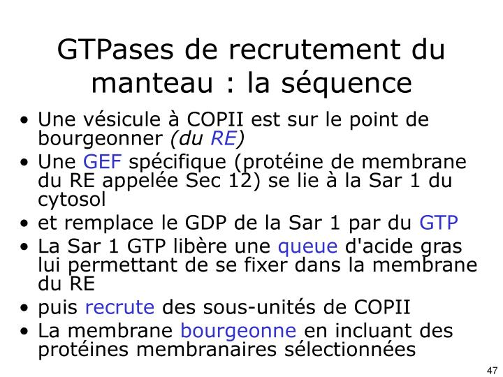 GTPases de recrutement du manteau : la séquence