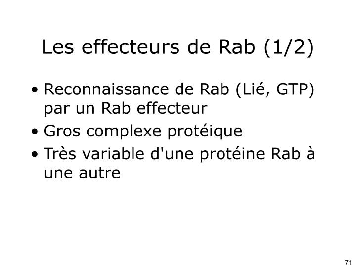 Les effecteurs de Rab (1/2)