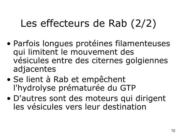 Les effecteurs de Rab (2/2)