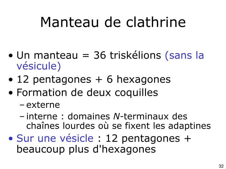 Manteau de clathrine
