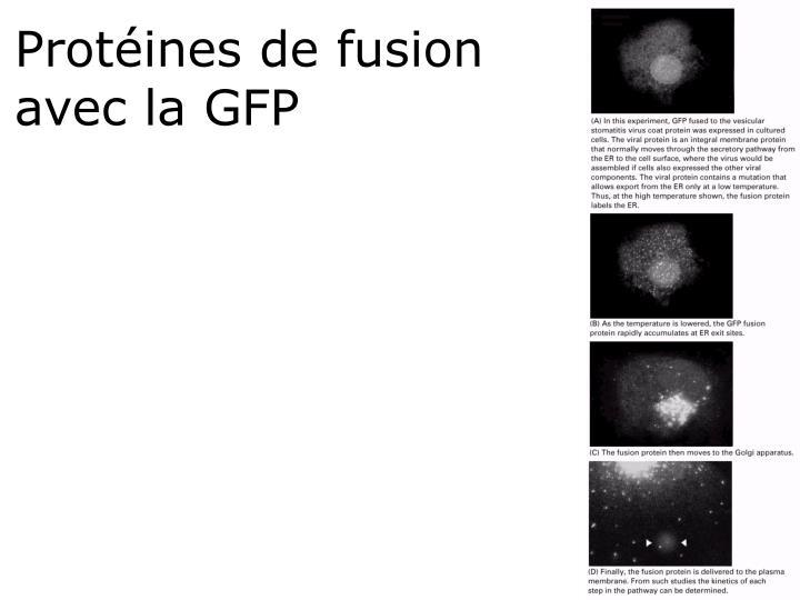 Protéines de fusion avec la GFP