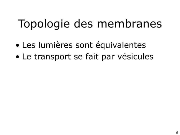 Topologie des membranes