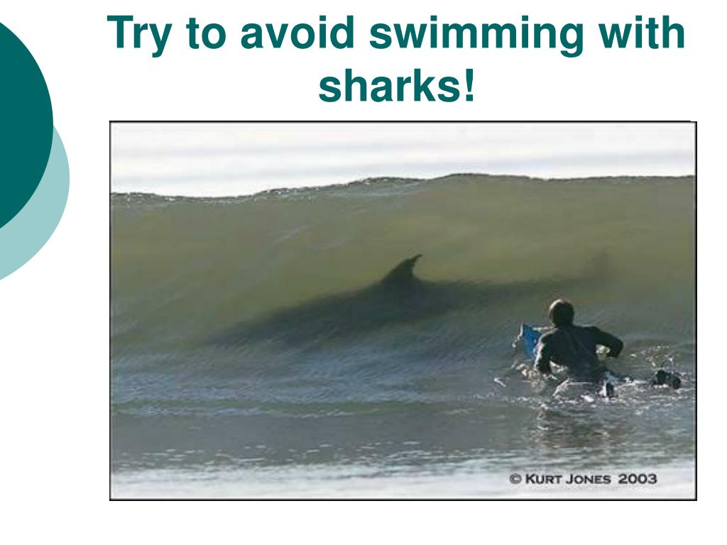 Try to avoid swimming with sharks!