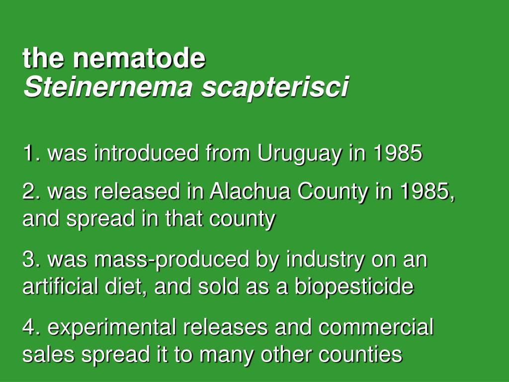 the nematode