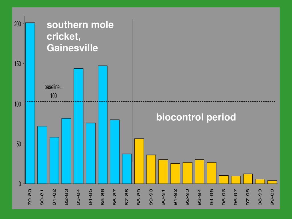 southern mole cricket, Gainesville