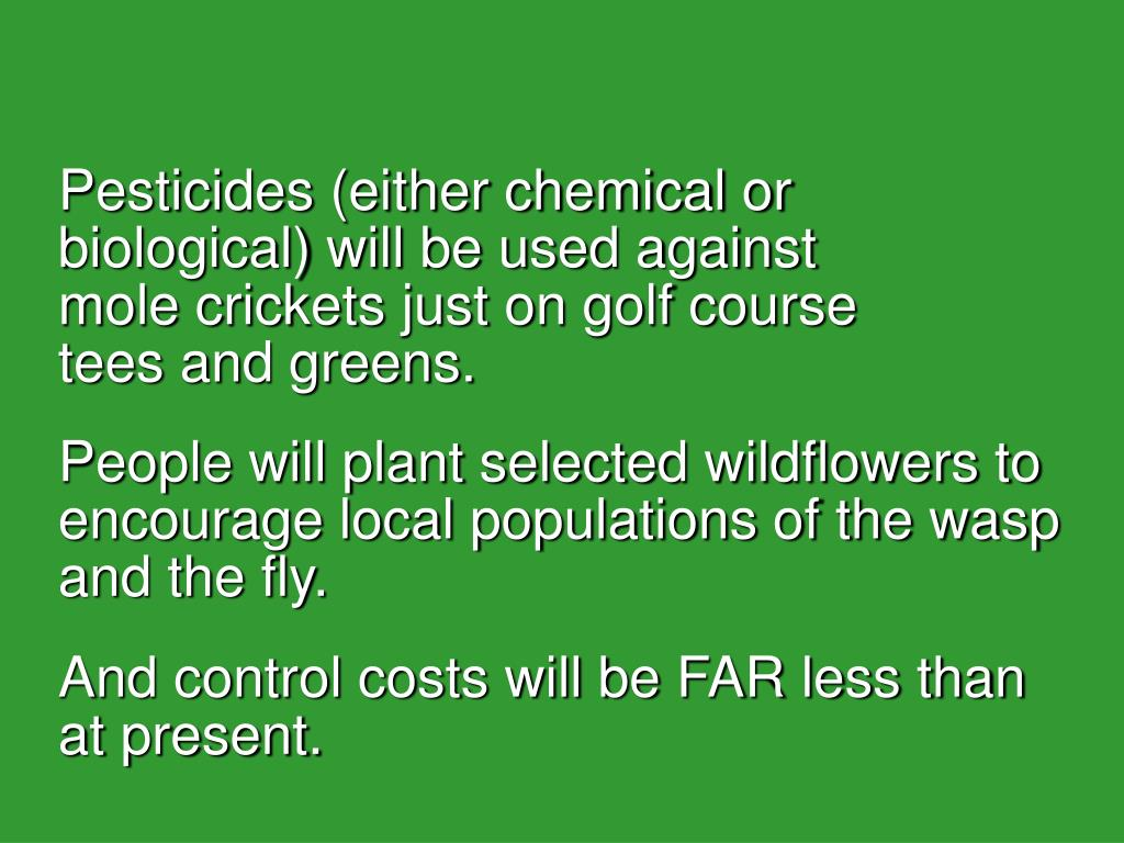 Pesticides (either chemical or biological) will be used against        mole crickets just on golf course      tees and greens.
