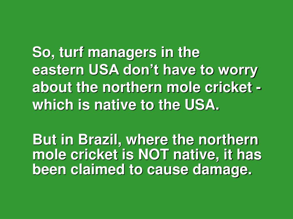 So, turf managers in the            eastern USA don't have to worry about the northern mole cricket - which is native to the USA.