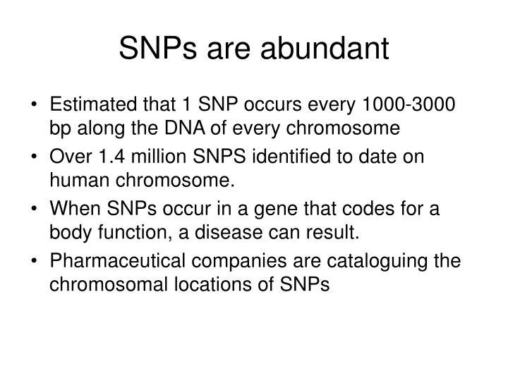 SNPs are abundant