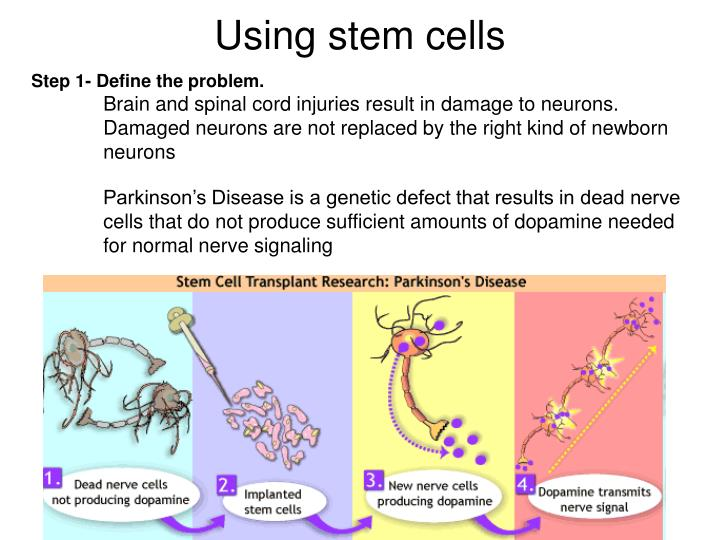 Using stem cells