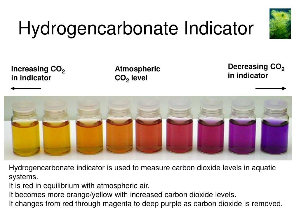 Hydrogencarbonate Indicator