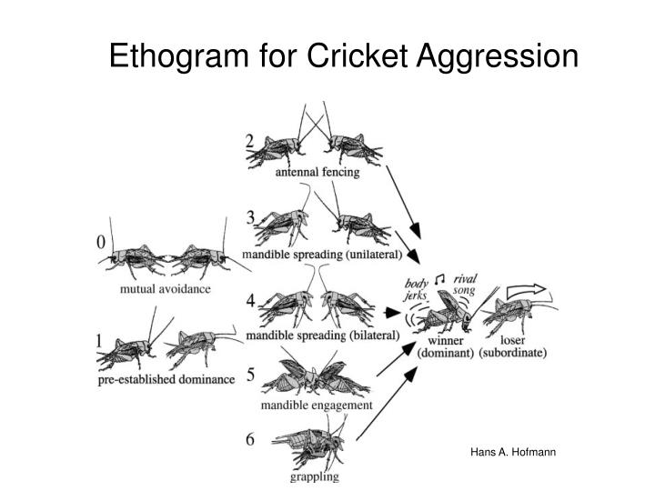 Ethogram for cricket aggression