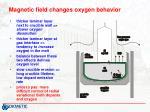 magnetic field changes oxygen behavior