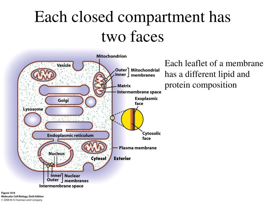 Each closed compartment has two faces