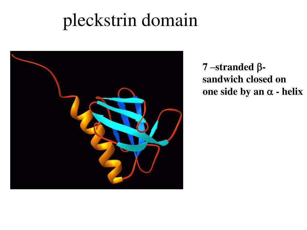 pleckstrin domain