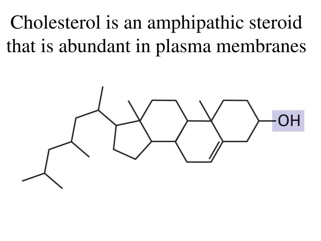 Cholesterol is an amphipathic steroid that is abundant in plasma membranes