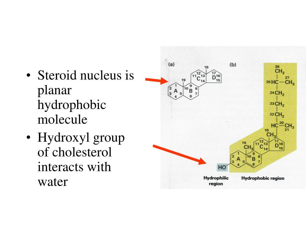 Steroid nucleus is planar hydrophobic molecule