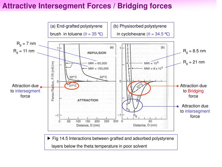 Attractive Intersegment Forces / Bridging forces