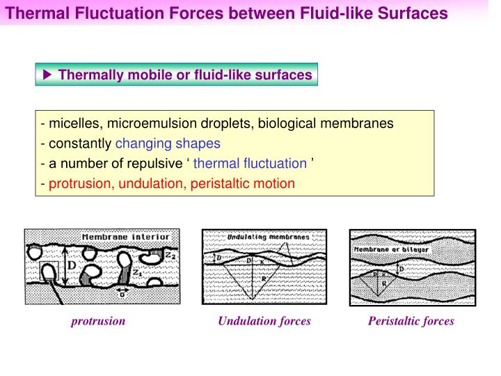Thermal Fluctuation Forces between Fluid-like Surfaces
