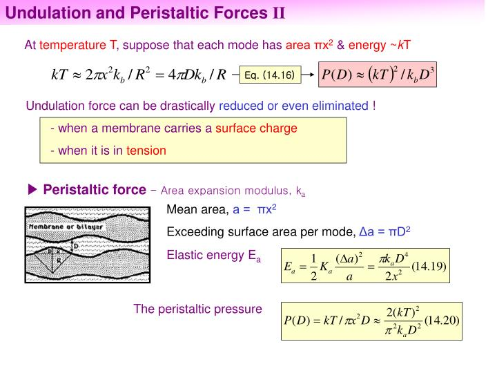 Undulation and Peristaltic Forces