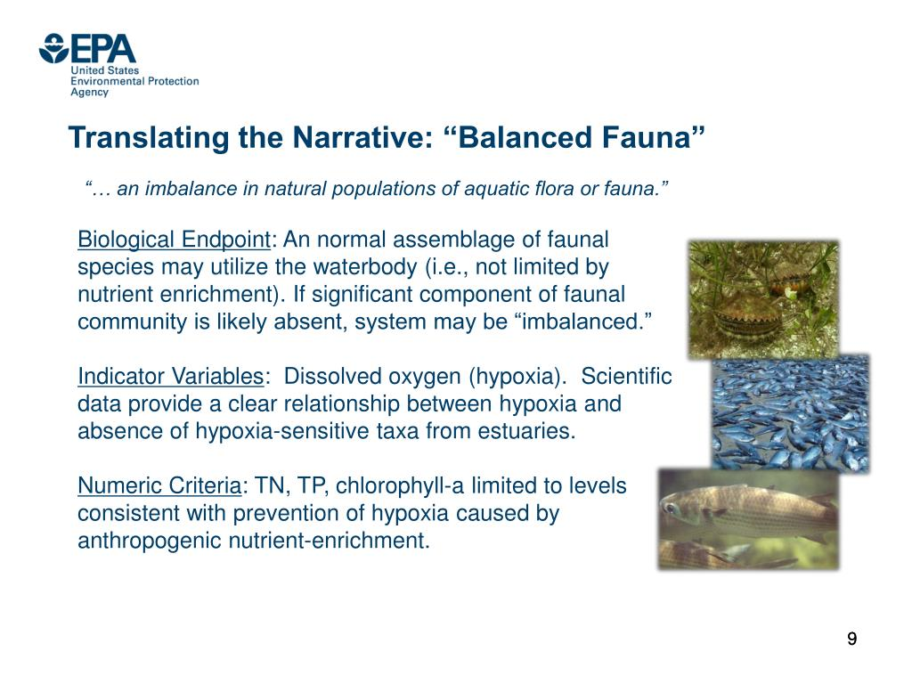 "Translating the Narrative: ""Balanced Fauna"""